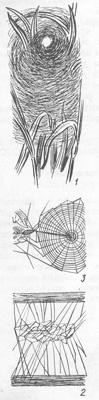 Ловчие сети пауков: 1 - агелены обыкновенной, 2 - стеатоды двупятнистой, 3 - крестовика мраморного.</i>