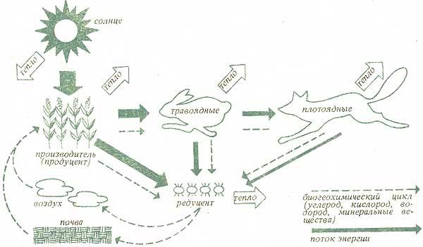 Круговорот питательных веществ: в любой экосистеме имеет место круговорот питательных веществ (элементов и соединений...