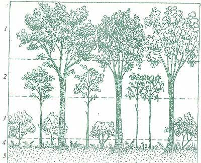 Сколь сложна жизнь в лиственном лесу