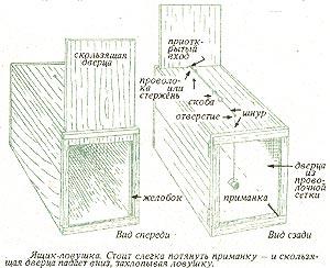 Ловушка для лис своими руками чертежи 146
