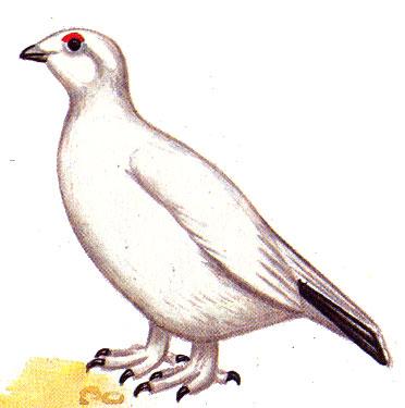 Животные красной книги пермского края с картинками 18