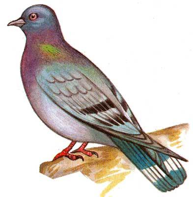 фото птиц средней полосы россии.