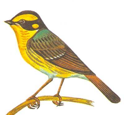 Это фото вы сможете посмотреть в архивах: хищные птицы