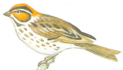 Небольшие птицы преимущественно