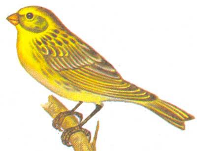 Птицы Приморья — на выставке во Владивостоке (ФОТО) – Новости ...   307x400
