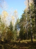Кусочек лесного неба