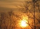 Солнышко в обятиях ветвей