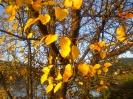Осеннии листья.