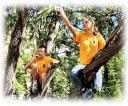 Болельщики на деревьях